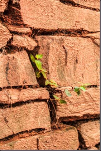 chimney-vine-2