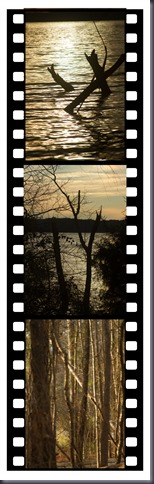 Out on a limb filmstrip