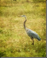heron at bennetts point