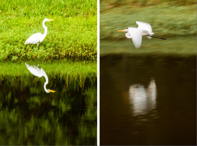 egret diptych