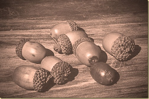 monochrome-acorns-2