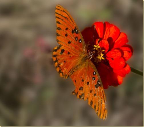 butterfly-final-edit