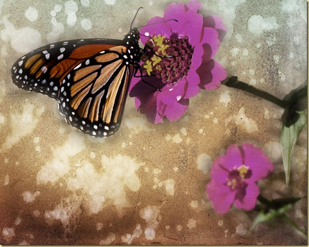 butterly-with-two-lil-owl-textures