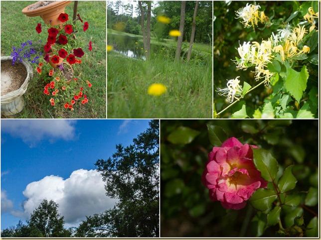 Picture Spring week 1